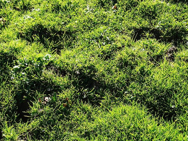 tráva, lúka, alpské lúky, šťavnaté zelené, Zelená, šťavnaté, tráva zelená