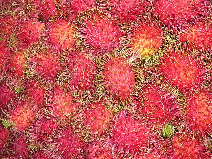 litxi, litsch, Sud-est, Àsia, Així, fruita, aliments