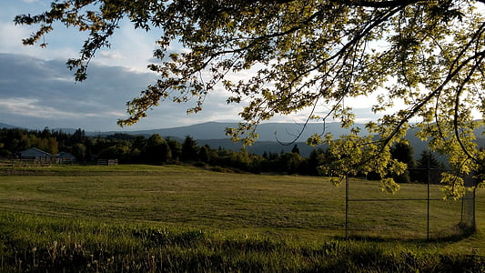 playing field, meadow, field, summer, outdoors, nature, trees