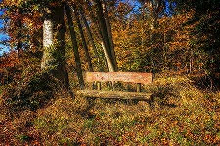 Banc, bosc, natura, resta, silenciós, tardor, Banc