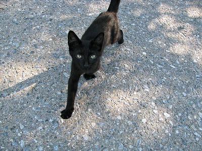 cat, kitty, kitten, little, young, tiny, feline