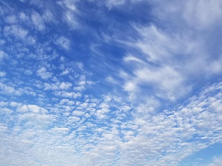 cel, núvol, blau, cel de núvols, blanc, núvols del cel, temps
