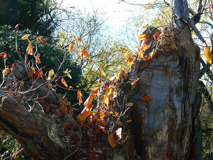Sügis, lehed, sügisel, hooaja, sügislehed, punane, November