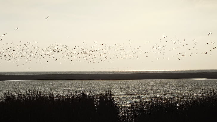 vizes élőhely, madarak, természet, táj