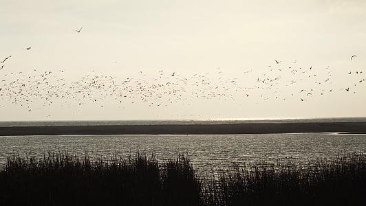 våtmarksområde, fugler, natur, landskapet