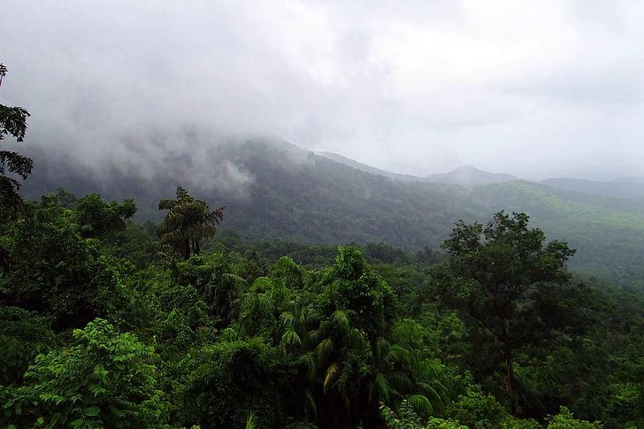 rainforest, mollem national park, western ghats, mountains, vegetation, clouds, orographic