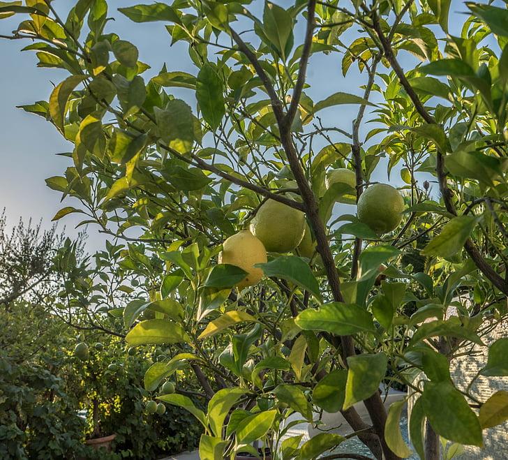 lime, természet, friss, zöld, egészséges, élelmiszer, gyümölcs