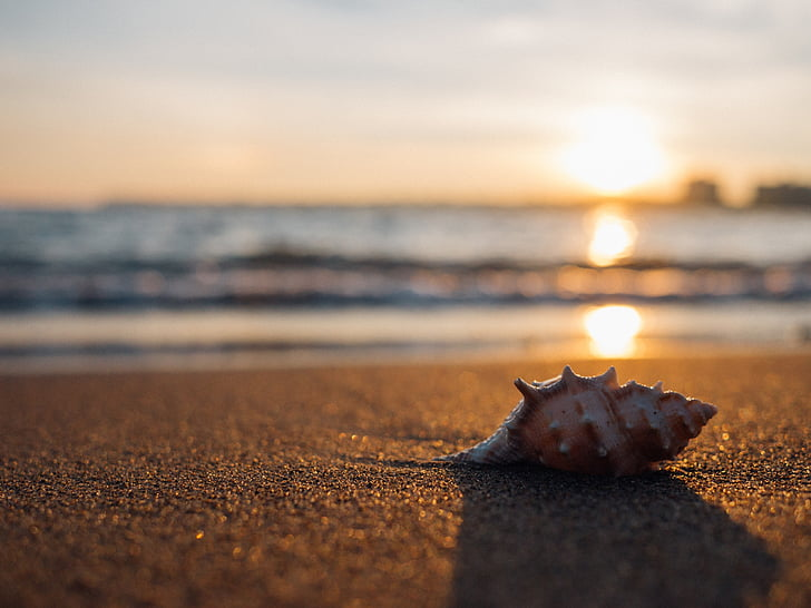closca, platja, al costat del mar, i, petxina de mar, l'estiu, vacances