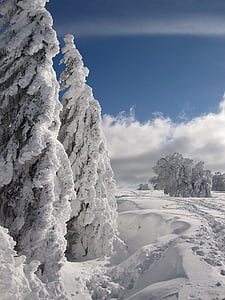 snow, winter, firs, wintry, winter forest, nature, cold