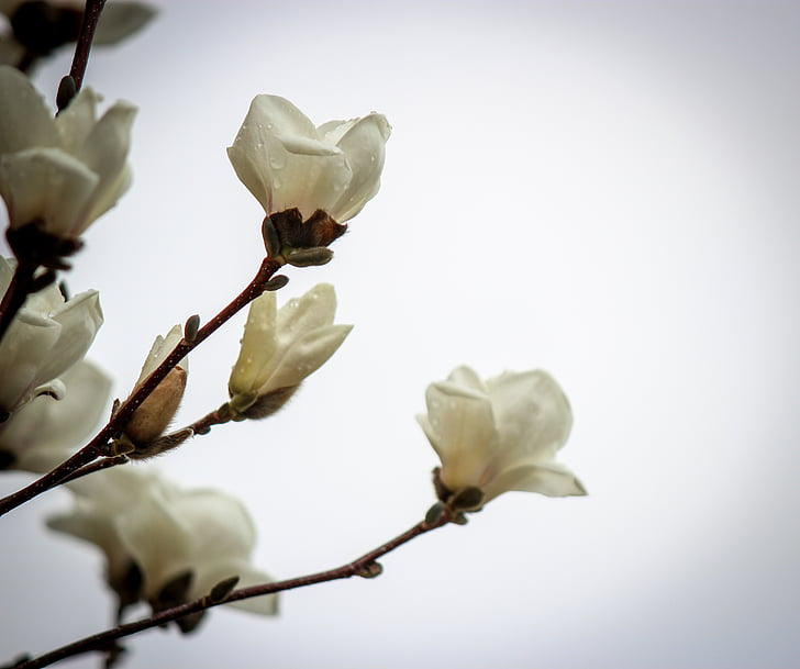 цветя, цвете, Пролет, Пролетно цвете, Пролетни цветя, слънчева светлина, Блум