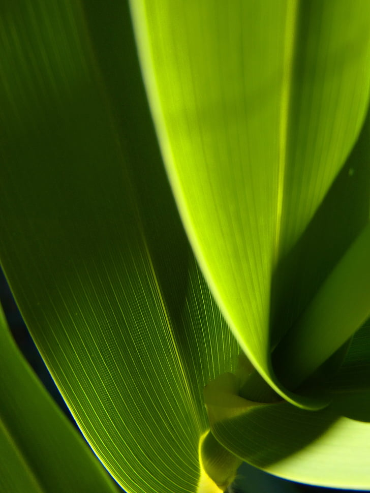 leaf, abstract, green, texture, contrast, light, green background