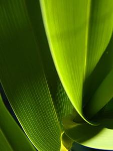 Leaf, abstraktné, Zelená, textúra, kontrast, svetlo, zelené pozadie