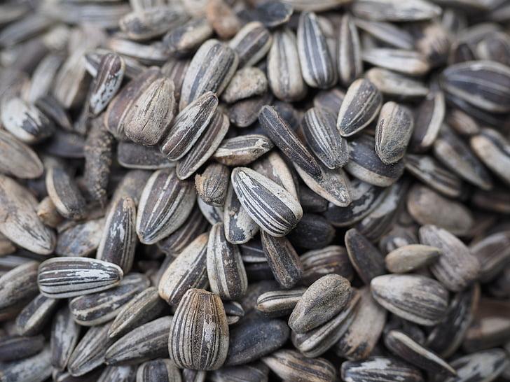 Семена подсолнечника, птица семя, Семена, питание, семя, крупным планом, стола