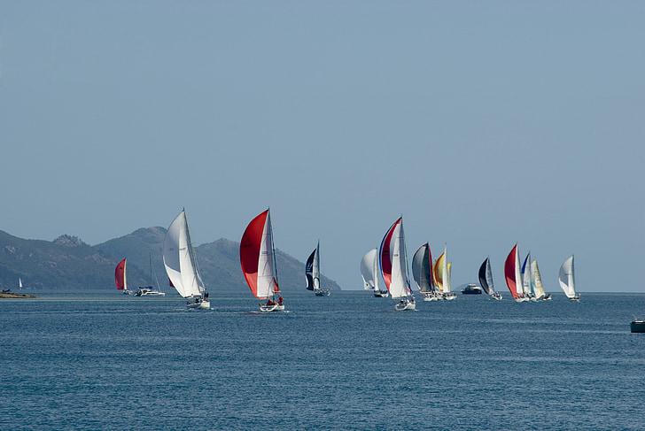 regatta, sailing, boat race, sailing boat, sails, ocean, boats
