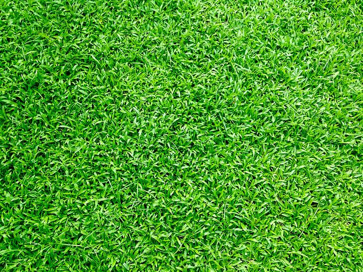 tráva, travnaté hřiště, zelená tráva, zelená, trávník, pole, louky a pastviny