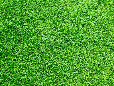 hierba, campo de hierba, hierba verde, verde, césped, campo, Prado