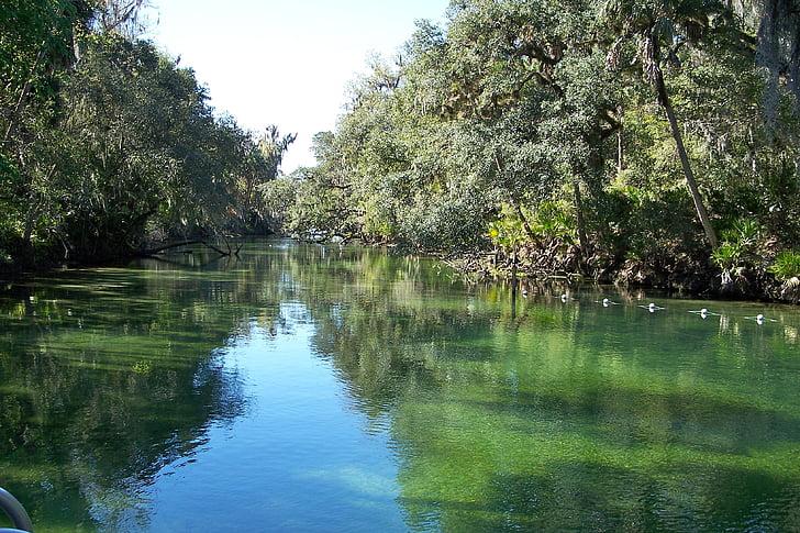 Blue springs Nehri, Florida, nehir, doğa, su, Yansımalar