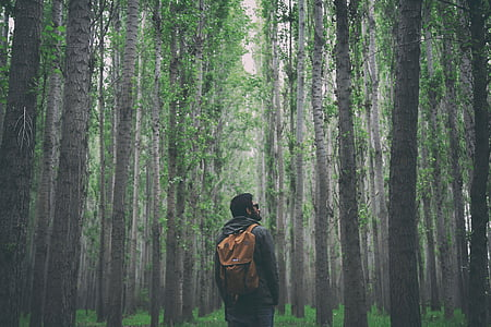 nature, woods, forest, people, man, guy, backpack