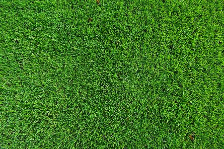 tráva, trávnik, trávnik, pozadie, textúra, Zelená, svieža