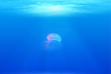 jellyfish, under water, sea, ocean, underwater, swimming, sea life