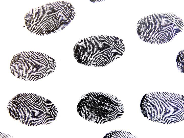 vingerafdruk, sporen, patroon, Detective, contrasten, vinger, vinger groeven
