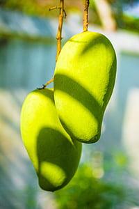 Mango, Mango tree, ovocie, ovocie, zelené mango