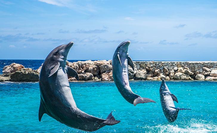 delfiner, akvarium, hoppning, fisk, djur, Ocean, vatten