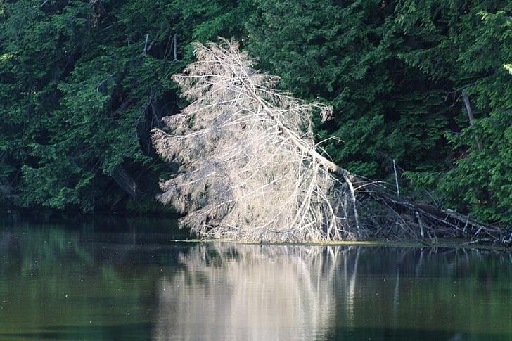 Välibassein, puud, loodus, hooaja, looduslik, looduslik taust, vee