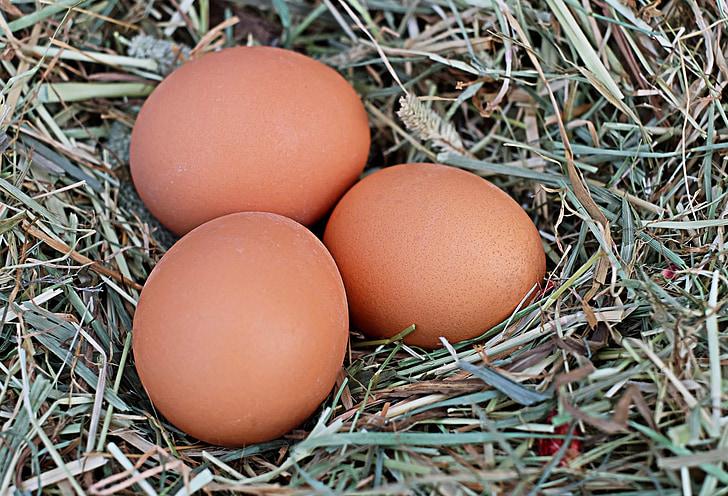 kiaušinių, vištų kiaušiniai, rudos spalvos, žemės ūkis, Bio