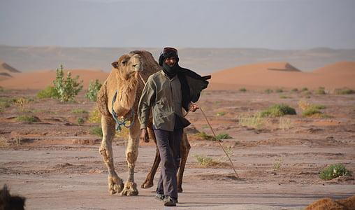 người Bedouin, lạc, Cát, sa mạc, lạc đà, Châu Phi, sa mạc Sahara