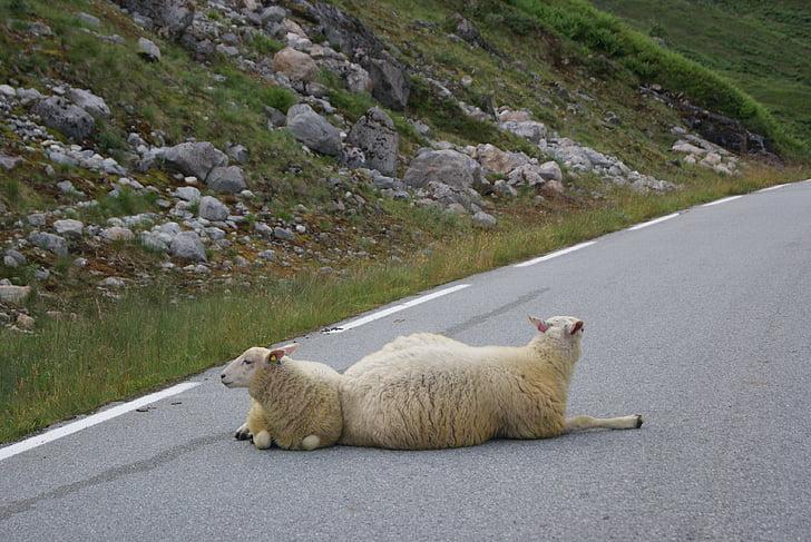 ovelles, camí, tranquil, carretera, paisatge, serè, Zen