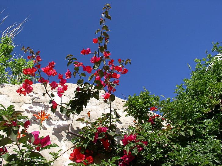 Греция, Цветы, небо, Голубой, красный, Киклады, Бугенвиль