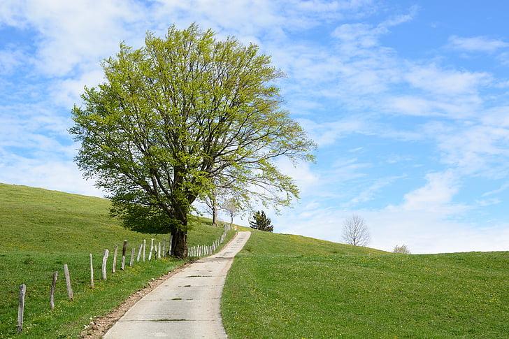 от отеля, дорога, Природа, Горизонт, небо, дерево, Весна