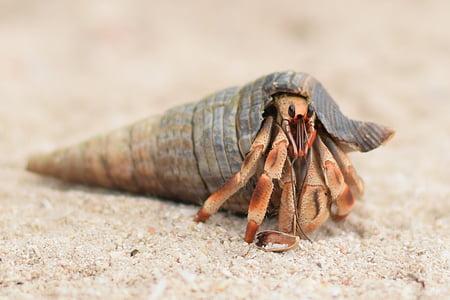 kraba, ne, Brisanje, jedna životinja, životinjske teme, pijesak, životinja životinje