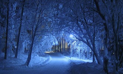invierno, noche, azul, cortina, árboles, cubierto de nieve, frío
