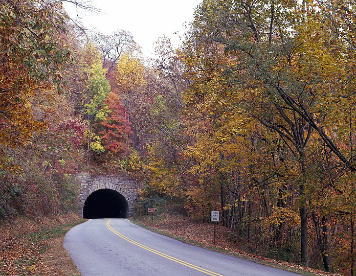 Tünel, yeşillik, Sonbahar, Sonbahar, Blue ridge parkway, ağaçlar, Sezon