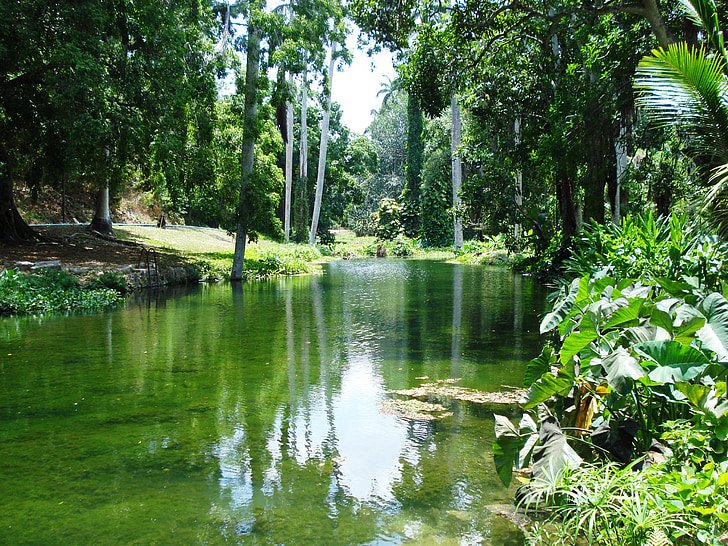 folyó, idill, táj, fa, idilli, természet, erdő