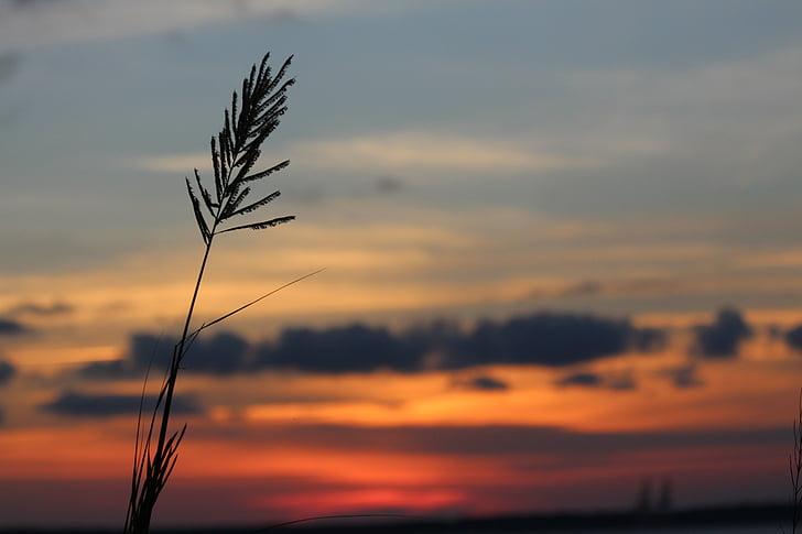 พระอาทิตย์ตก, เมฆ, สีฟ้า, ภูมิทัศน์, ตอนเย็น, สีส้ม, เงา