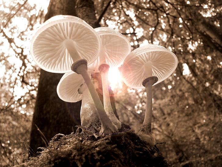 meža, sēnes, daba, rudens, gaisma, koks, zelta rudens