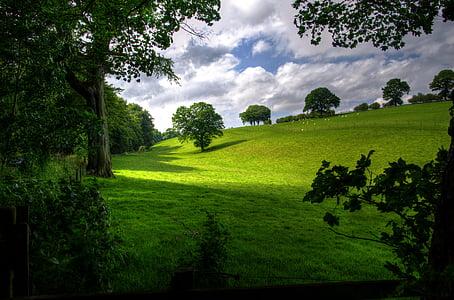 paisatge, primavera, fusta, escèniques, verd, arbres, natura