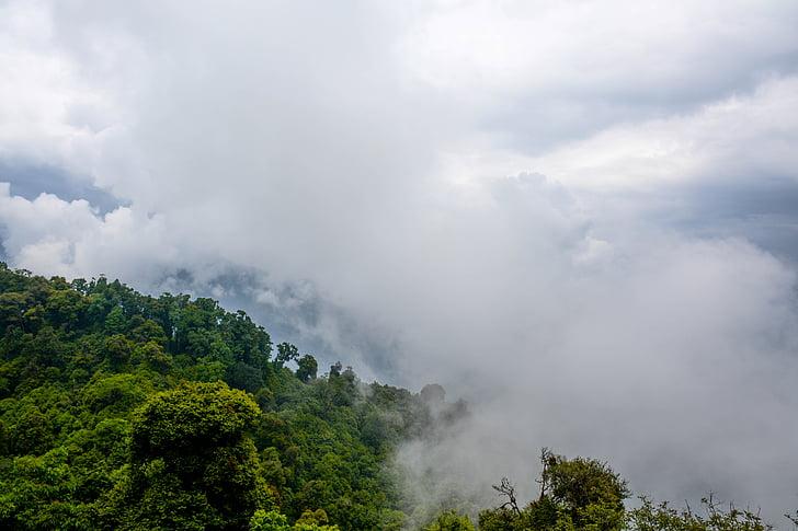 natureza, paisagem, floresta, floresta, árvores, folhas, verde