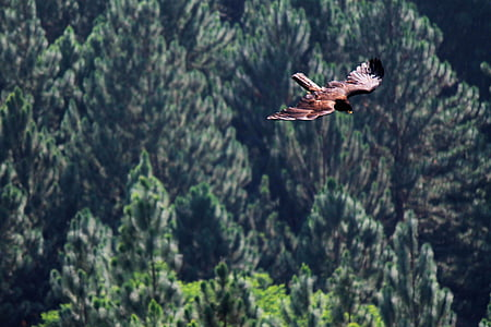 eagle, bird, bird of prey, fly, dom, nature