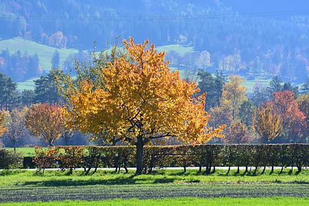 Sonbahar, ağaç, Altın sonbahar, ruh hali, yaprakları, sonbaharda ağaç, sonbahar renk