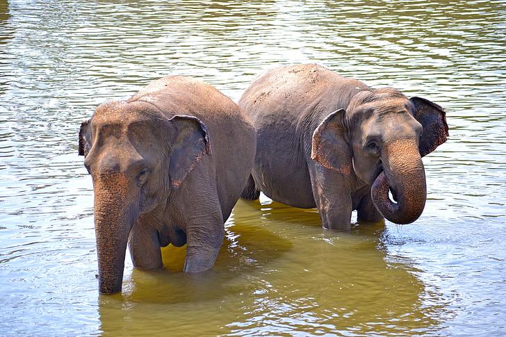 elefanttien, norsut, Kylpyamme, auringosta, joen Kylpyamme, River, Maha oya river