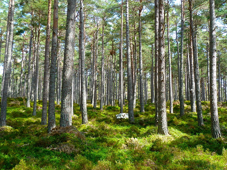 forest, trees, ecology, environment, landscape, plants, nature