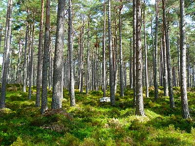 bosc, arbres, Ecologia, medi ambient, paisatge, plantes, natura