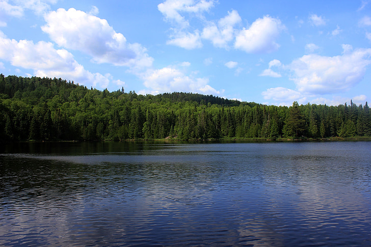 Walvis, Lake, superieure national forest, Verenigde Staten, Minnesota, bos