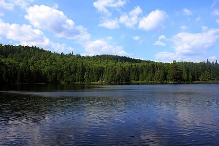Whale, sjön, överlägsen nationalskog, USA, Minnesota, skogen