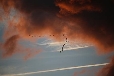 clouds, sky, bird migration, dark clouds, evening sky, sunset, flying