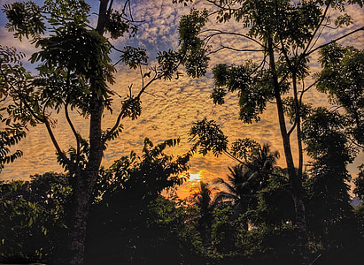 soluppgång, träd, landskap, djungel, Dawn, skymning, Twilight